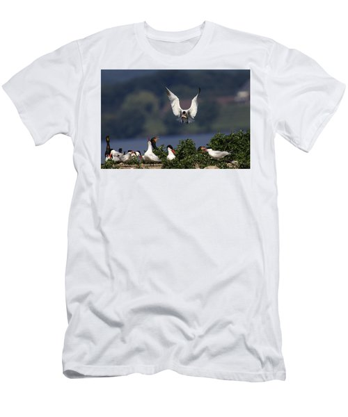 Caspian Tern Colony Men's T-Shirt (Athletic Fit)