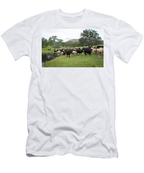 Cattle Men's T-Shirt (Slim Fit) by Diane Bohna
