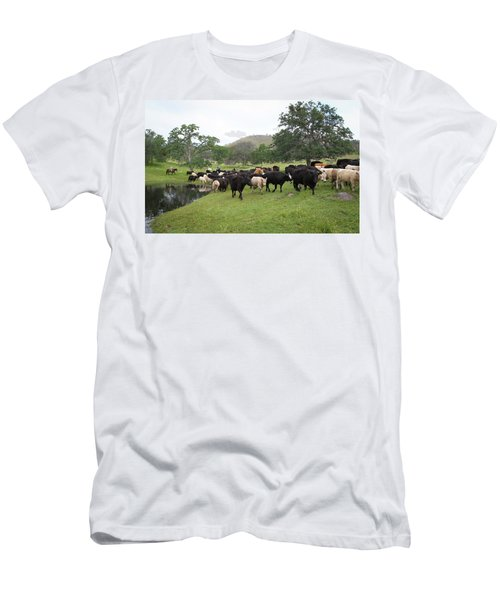 Cattle Men's T-Shirt (Slim Fit)