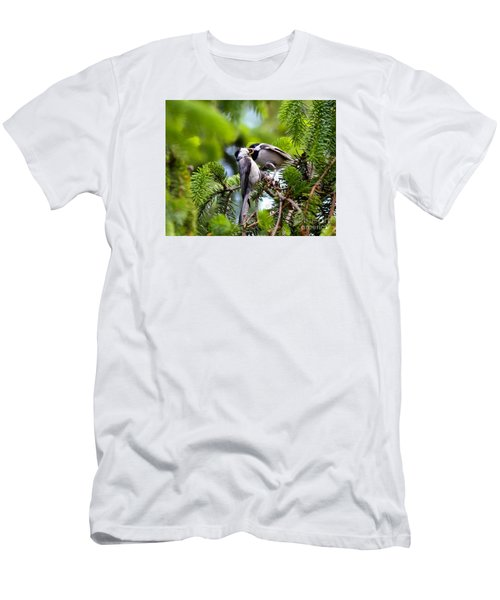 Chickadee Feeding Time Men's T-Shirt (Athletic Fit)