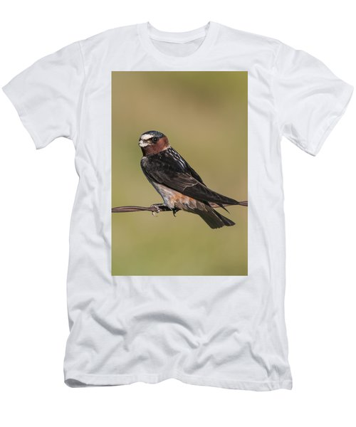 Cliff Swallow Men's T-Shirt (Athletic Fit)