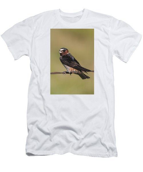 Cliff Swallow Men's T-Shirt (Athletic Fit)