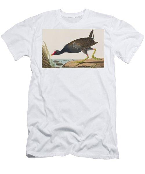 Common Gallinule Men's T-Shirt (Athletic Fit)