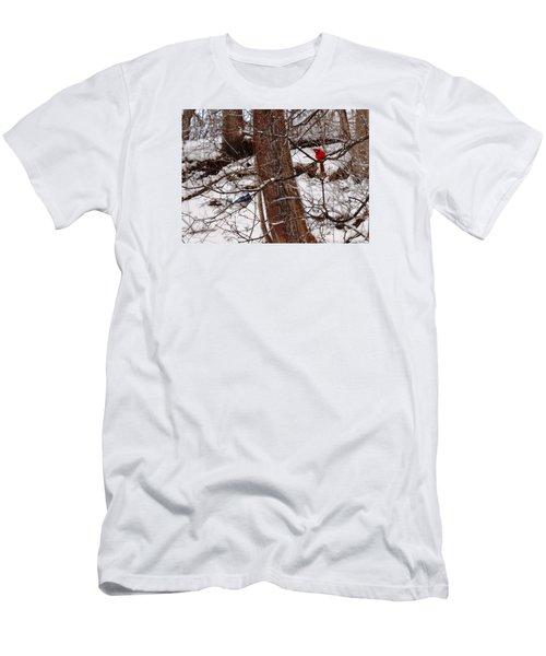 Curious Cardinal Men's T-Shirt (Athletic Fit)