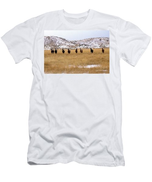 Curious Horses Men's T-Shirt (Athletic Fit)