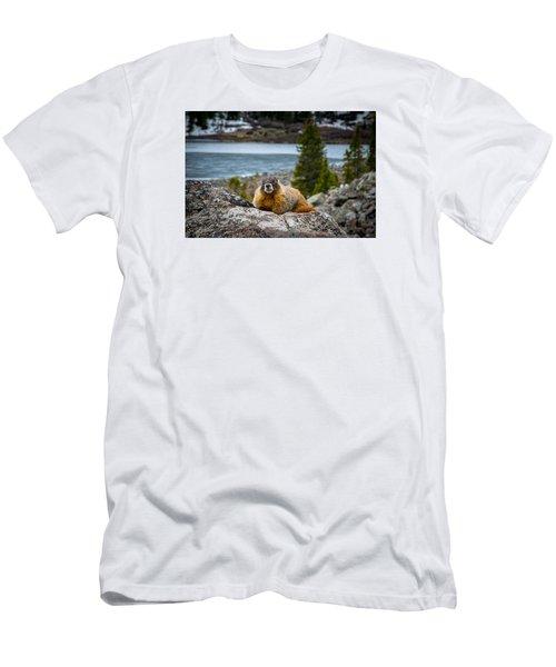 Curious Marmot Men's T-Shirt (Slim Fit) by Michael J Bauer