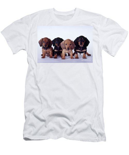 Dachshund Puppies  Men's T-Shirt (Athletic Fit)