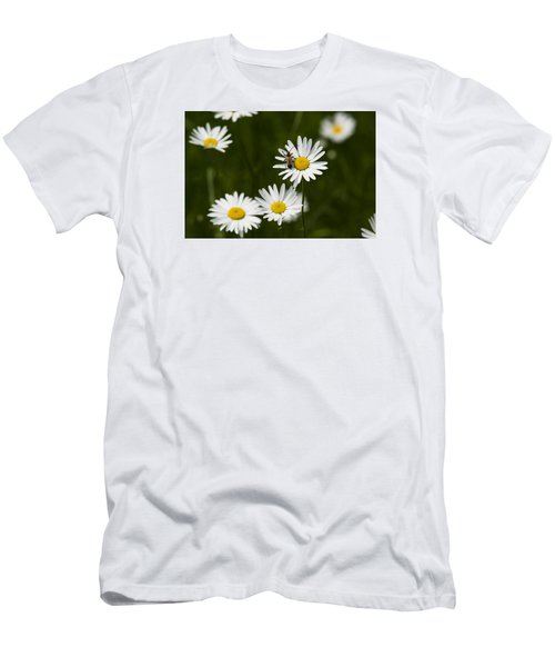 Daisy Visitor Men's T-Shirt (Slim Fit) by Dan Hefle