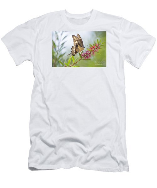 Eastern Tiger Swallowtail Butterfly On Bottlebrush Men's T-Shirt (Athletic Fit)