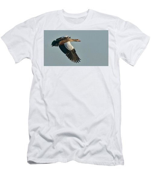 Egyptian Goose Men's T-Shirt (Athletic Fit)