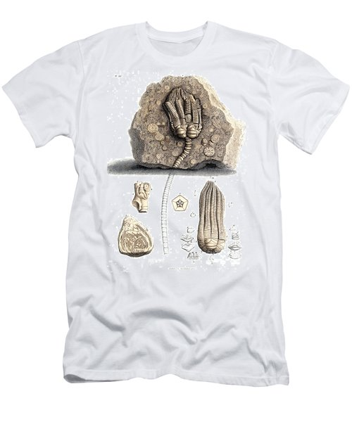 Fossil Remains In Stone, 1833 Men's T-Shirt (Athletic Fit)