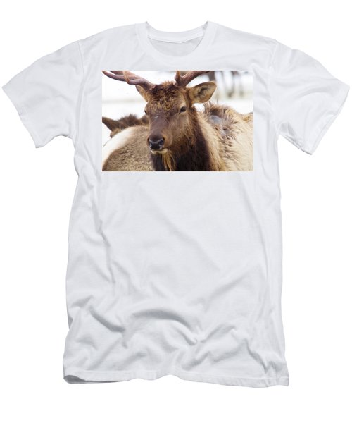 Men's T-Shirt (Slim Fit) featuring the photograph Gaze From A Bull Elk by Jeff Swan