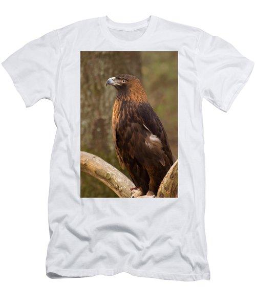 Golden Eagle Resting On A Branch Men's T-Shirt (Slim Fit) by Chris Flees