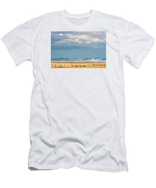 Grazing Near Highwood Men's T-Shirt (Athletic Fit)
