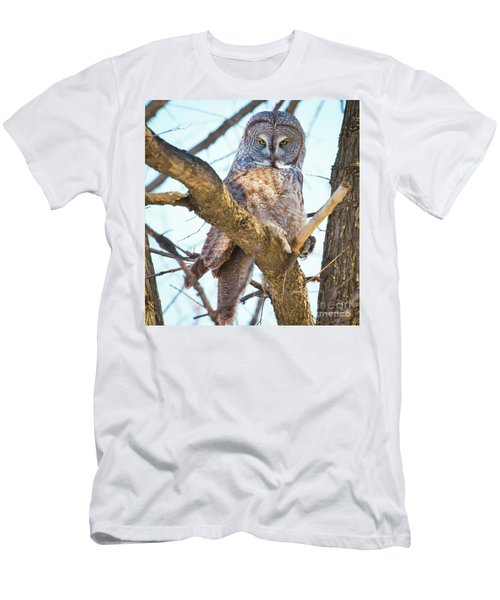 Great Gray Owl Men's T-Shirt (Slim Fit) by Ricky L Jones
