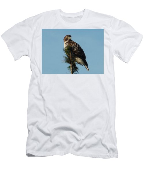 Hawk Atop Tree Men's T-Shirt (Athletic Fit)