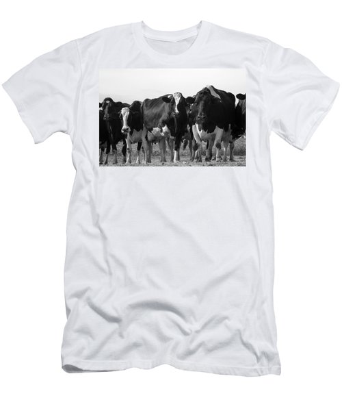 Curious Holsteins Men's T-Shirt (Athletic Fit)