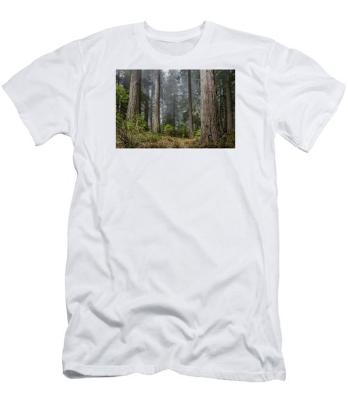 Into The Redwood Forest Men's T-Shirt (Slim Fit) by Greg Nyquist