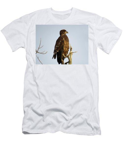 Juvenile Bald Eagle 1 Men's T-Shirt (Athletic Fit)