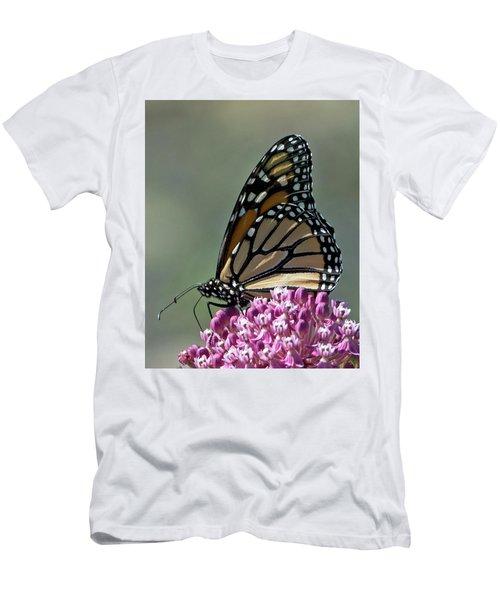 King Of The Butterflies Men's T-Shirt (Slim Fit) by Stephen Flint
