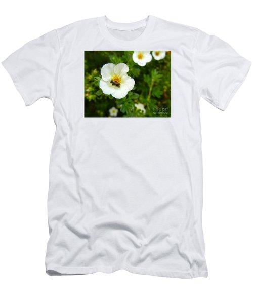Massachusetts Carpenter Bee Men's T-Shirt (Slim Fit) by KD Johnson