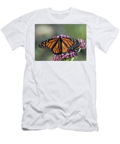 Monarch Butterfly Men's T-Shirt (Slim Fit) by Stephen Flint