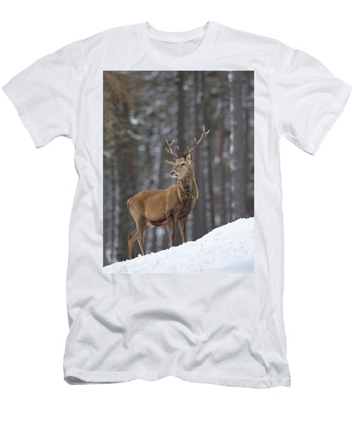 Monarch Of The Woods Men's T-Shirt (Athletic Fit)