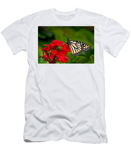 Monarh Butterfly Men's T-Shirt (Athletic Fit)