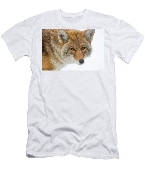 Mr. Coyote Men's T-Shirt (Athletic Fit)