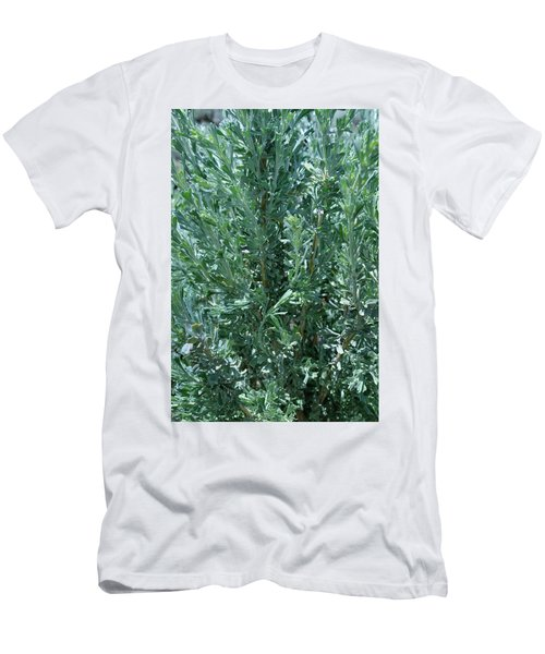 New Sage Men's T-Shirt (Athletic Fit)