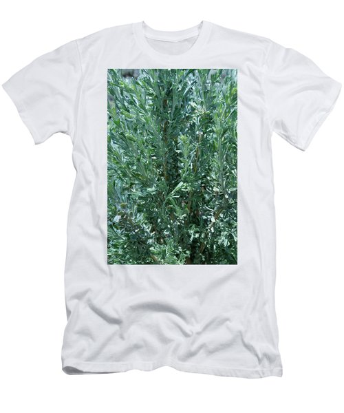 Men's T-Shirt (Athletic Fit) featuring the photograph New Sage by Ron Cline