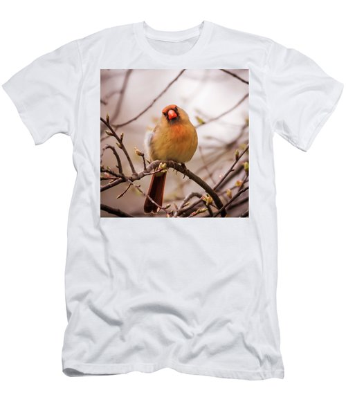Men's T-Shirt (Slim Fit) featuring the photograph Northern Female Cardinal Pose by Terry DeLuco