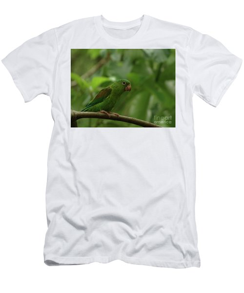 Orange-chinned Parakeet  Men's T-Shirt (Athletic Fit)