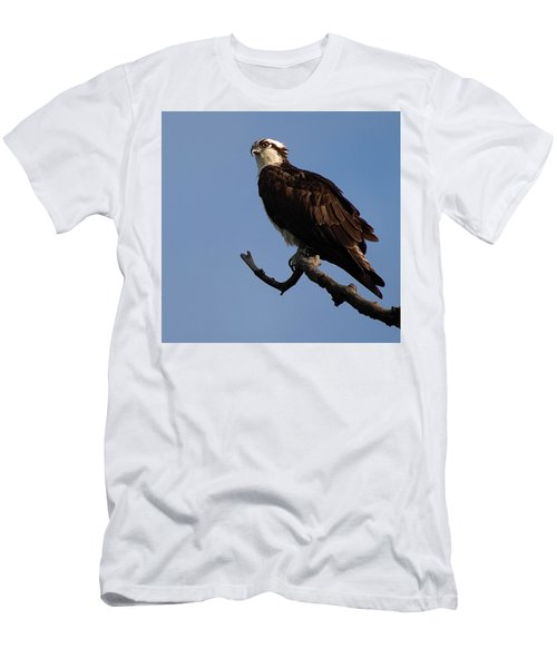 Osprey Men's T-Shirt (Athletic Fit)