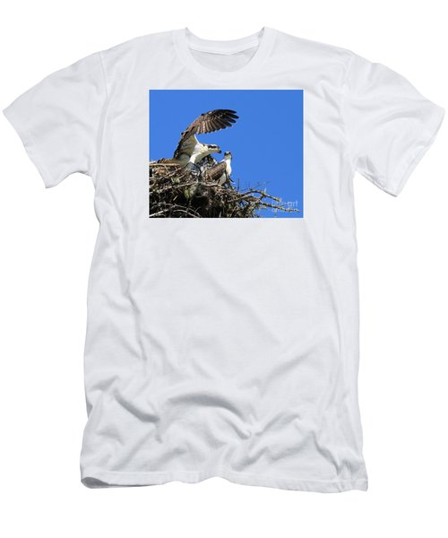 Osprey Chicks Ready To Fledge Men's T-Shirt (Athletic Fit)