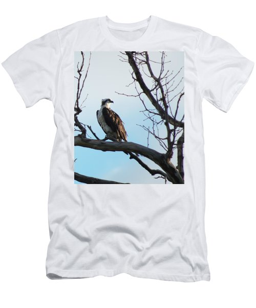 Osprey In Tree Men's T-Shirt (Athletic Fit)