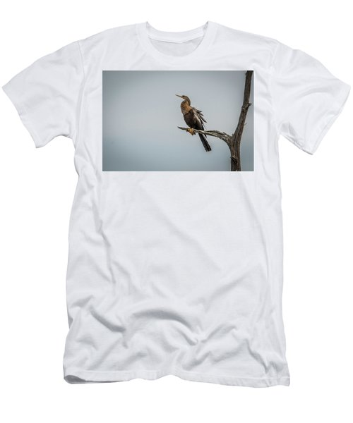 Perched Anhinga Men's T-Shirt (Athletic Fit)