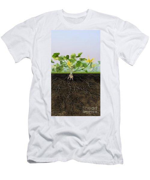 Pilewort Or Lesser Celandine Ranunculus Ficaria - Root System -  Men's T-Shirt (Athletic Fit)