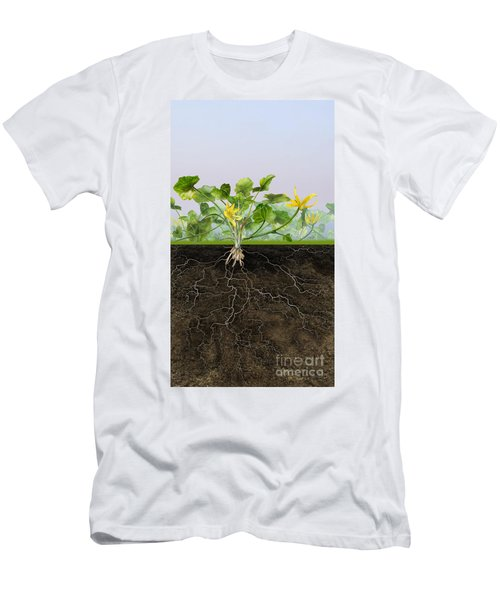Pilewort Or Lesser Celandine Ranunculus Ficaria - Root System -  Men's T-Shirt (Athletic Fit)