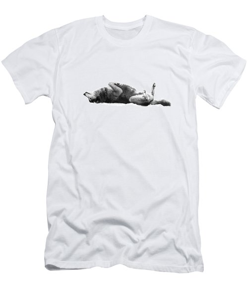 Playful Gray Wolf Photo Men's T-Shirt (Athletic Fit)