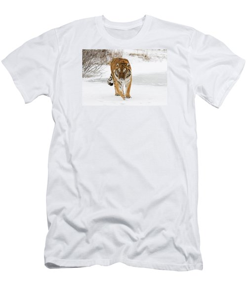 Prowling Tiger Men's T-Shirt (Athletic Fit)