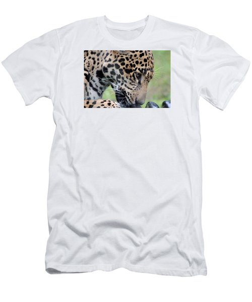 Jaguar And Toy Men's T-Shirt (Athletic Fit)