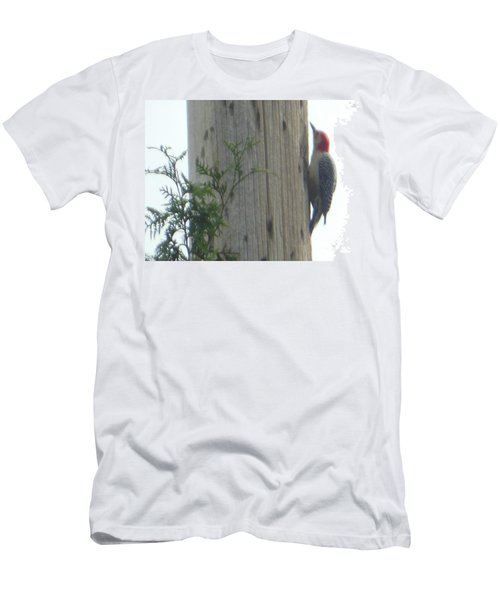 Red Bellied Woodpecker Men's T-Shirt (Athletic Fit)