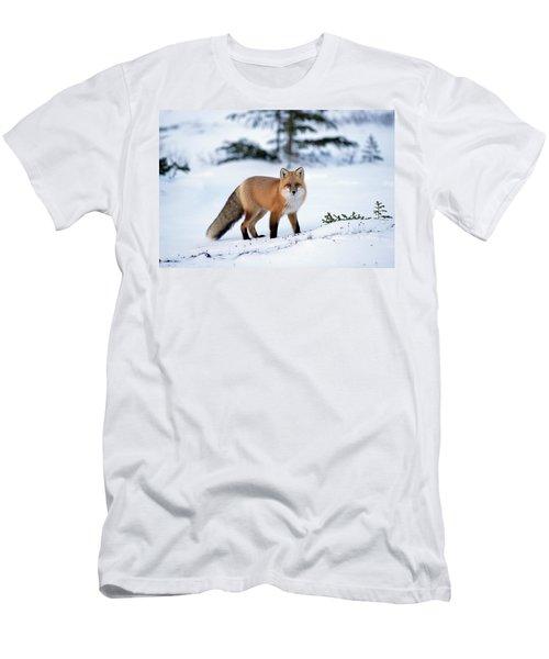 Red Fox Vulpes Vulpes Portrait Men's T-Shirt (Athletic Fit)