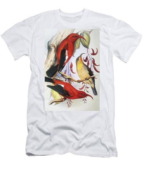 Red Hawaiian Honeycreeper Men's T-Shirt (Athletic Fit)