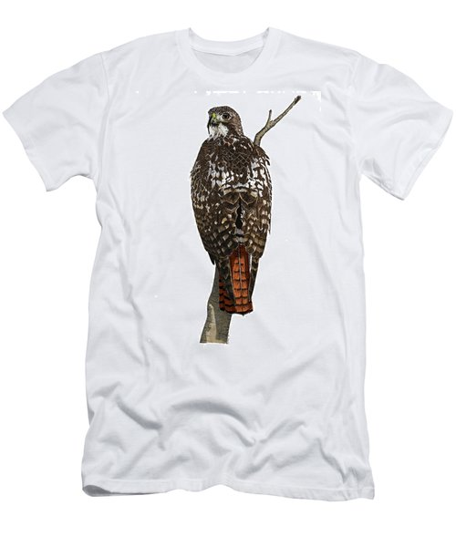 Red-tailed Hawk - Color Men's T-Shirt (Athletic Fit)