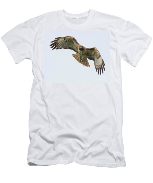 Red Tailed Hawk Finds Its Prey Men's T-Shirt (Athletic Fit)