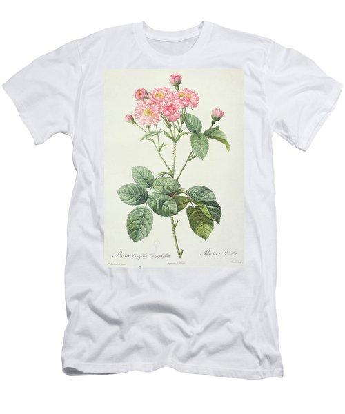 Rosa Centifolia Caryophyllea Men's T-Shirt (Athletic Fit)