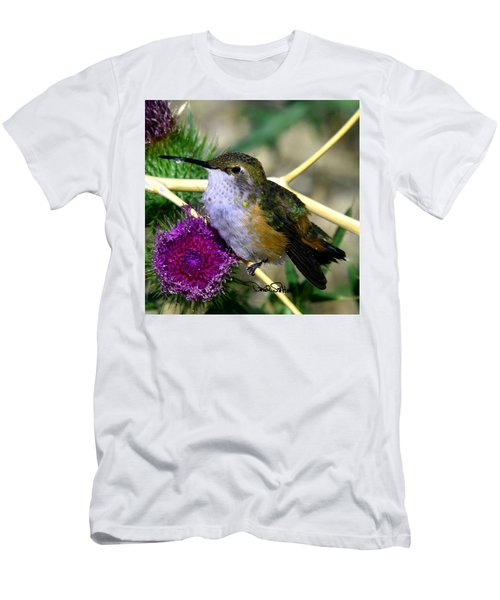 Rufous Hummingbird On Thistle Men's T-Shirt (Athletic Fit)
