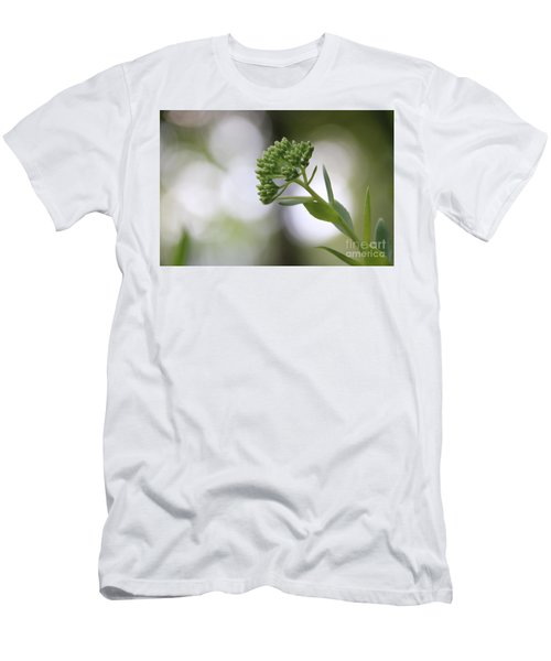 Sedum Buds At Late Evening Men's T-Shirt (Slim Fit) by Marilyn Carlyle Greiner